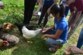 Teen Chefs visit the chickens on the Chatham University Eden Hall Farm